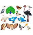 Different kind of wild birds vector image