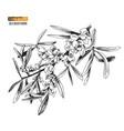 hand drawn sea buckhorn branch vector image vector image