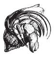 hermit crab vintage vector image vector image