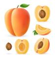 realistic apricot set vector image