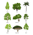 different trees collection and exotic palms vector image