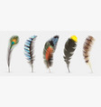 realistic bird feathers detailed colorful feather vector image