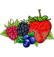 berry fruits cartoon vector image