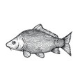 carp fish hand drawn isolated icon vector image