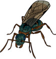 cartoon winded ant vector image