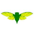beautiful cicada vector image vector image