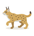 friendly forest animal cute yellow lynx icon vector image