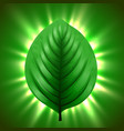 green leaf with light beams eco nature background vector image vector image
