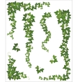 Hanging branches of ivy Set vector image vector image