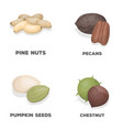 pecan pine nut pumpkin seeds chestnutdifferent vector image