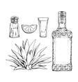 Set of tequila bottle shot salt mill agave and vector image
