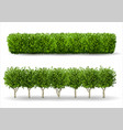 bush in the form of a green hedge vector image vector image