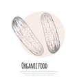 Hand drawn cucumber over white background vector image vector image