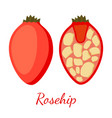 rosehip seeds plant cartoon flat style vector image vector image