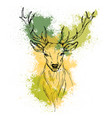 sketch by pen head noble deer front view vector image