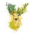 sketch pen head noble deer front view vector image