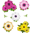 African daisy collection vector | Price: 3 Credits (USD $3)