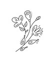 bouquet floral hand drawn elements in vector image vector image