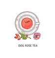 dog rose tea in glass teacup and plate duo vector image vector image