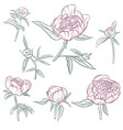 floral set of peonies vector image