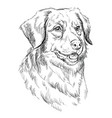 toller hand drawing portrait vector image vector image