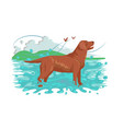 fluffy brown labrador standing in water in nature vector image vector image