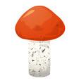 leccinum edible mushroom vector image vector image