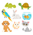 set of home animal pet vector image