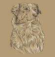 monochrome australian shepherd hand drawing vector image vector image