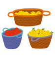 straw baskets with yellow and red apples vector image
