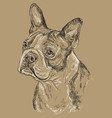monochrome boston terrier hand drawing portrait vector image vector image