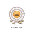 rooibos tea in glass cup drawing seen from top vector image vector image