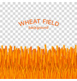 golden wheat field on checkered background vector image vector image
