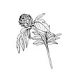 milk thistle bud black ink freehand sketch vector image