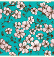 springtime wallpaper with apricot blossom vector image