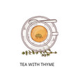 tea with thyme in glass cup - top view drawing vector image vector image