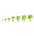 crop cycle for banana tree crop stages bananas vector image vector image