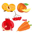 fruits vegetables and berry vector image vector image