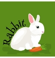 Pets Domastic animals white rabbit isolated vector image