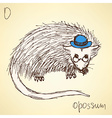 Sketch fancy opposum in vintage style vector image vector image