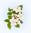 Apple tree branch with flowers and buds vector image vector image