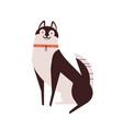 husky dog flat cute pet vector image