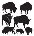 Silhouettes buffalo