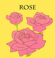three pink roses with yellow background vector image