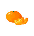 cartoon fresh tangerine or mandarin orange fruit vector image