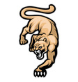 crawling cougar vector image vector image