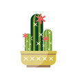 flowering cactus house plant indoor flower in pot vector image vector image