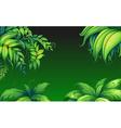Green leafy plants vector image vector image