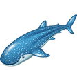 Cartoon whale shark isolated on white background vector image