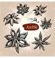 Anise vector image vector image